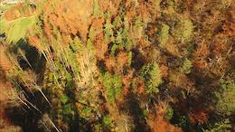 Fallen Leaves - Video