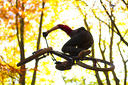 Full Autumn: Dropping Leaves and Tricks - Video