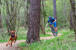 Ruby the Trail Dog - Video